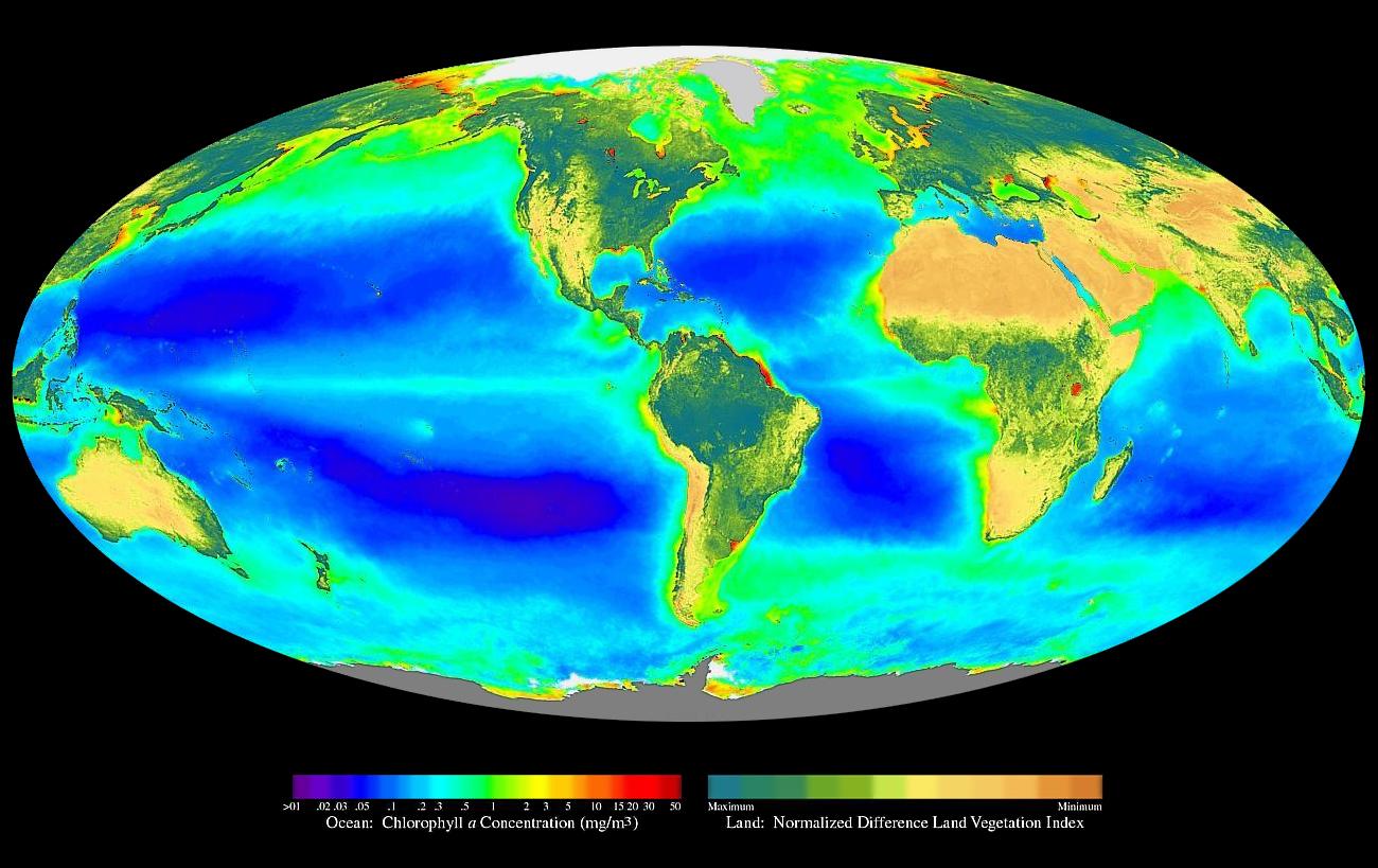 Resultado de imagen para fotosintesis wikipedia