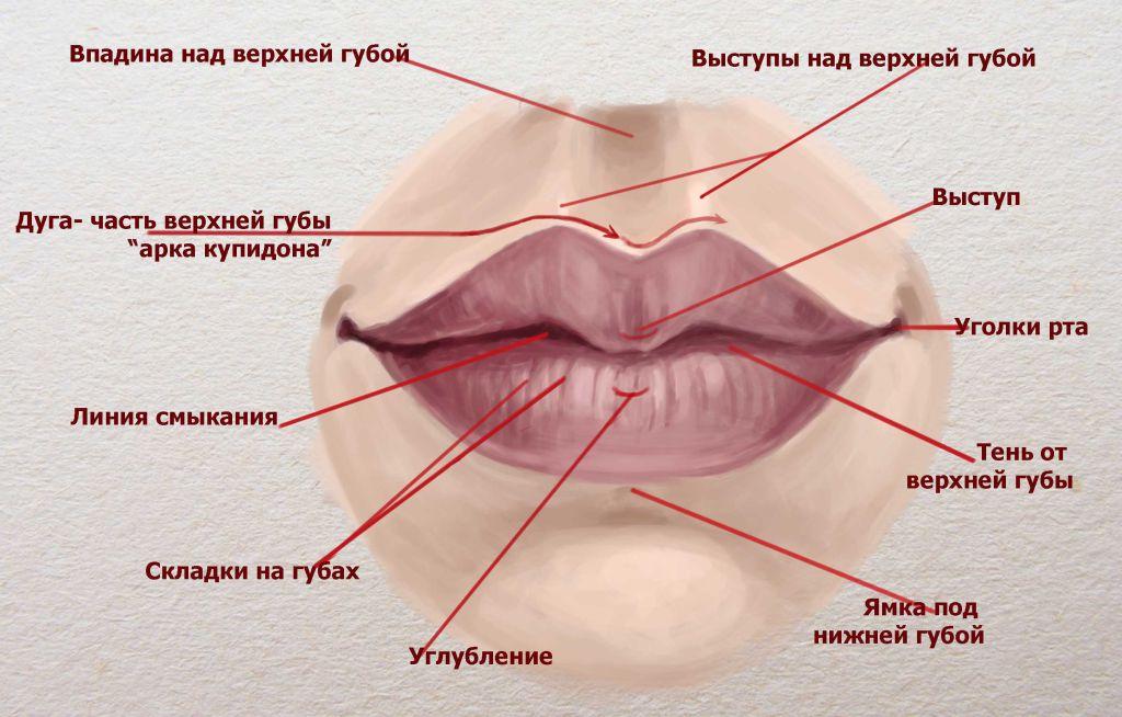 lips-build