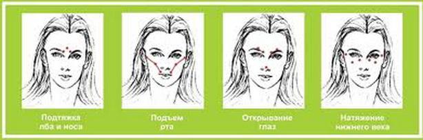 Косметология схема постановка пиявок на лицо